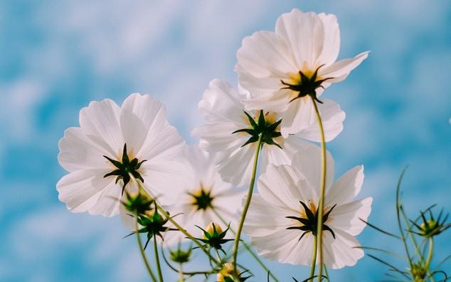 Spring (primavara) 10017777-thumb