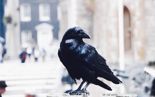 Benchmarking RavenDB Bulk Insert on Commodity Hardware