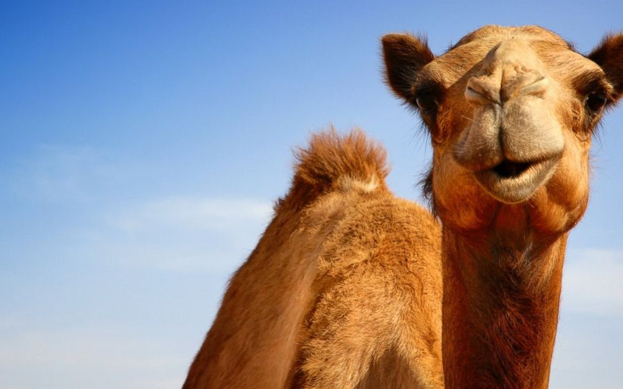 Apache camel tutorialeip routes components testing and more apache camel tutorialeip routes components testing and more dzone integration malvernweather Images