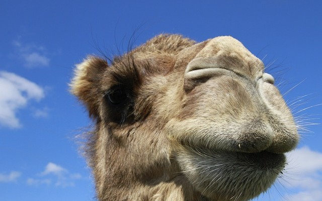 Learn Apache Camel: Indexing Tweets in Real-time - DZone