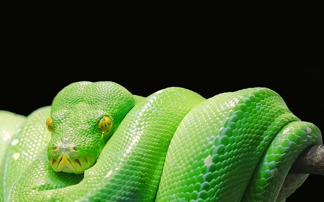 Testing With Python and Why It Makes Sense - DZone DevOps