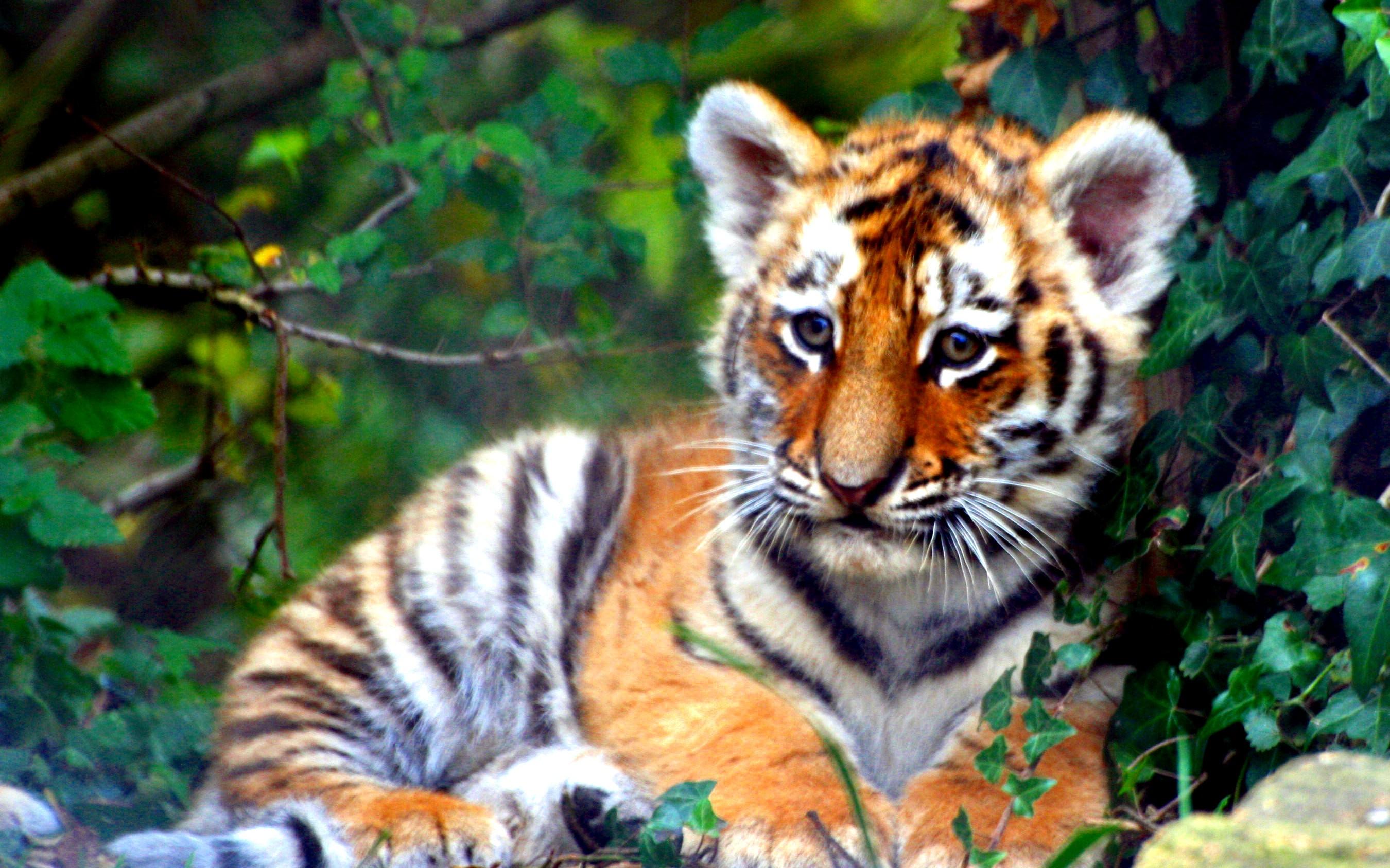 Tiger Team Survival Guide Part I
