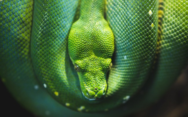 Parallelism and Concurrency in Python - DZone Big Data