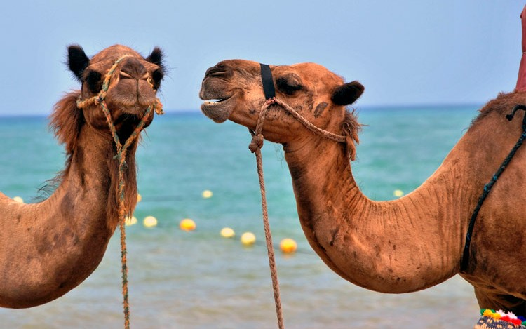 Implementing Multicasting With Apache Camel - DZone Integration