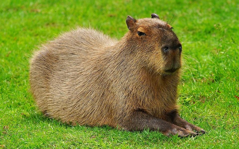Rails Capybara Setup - DZone Web Dev