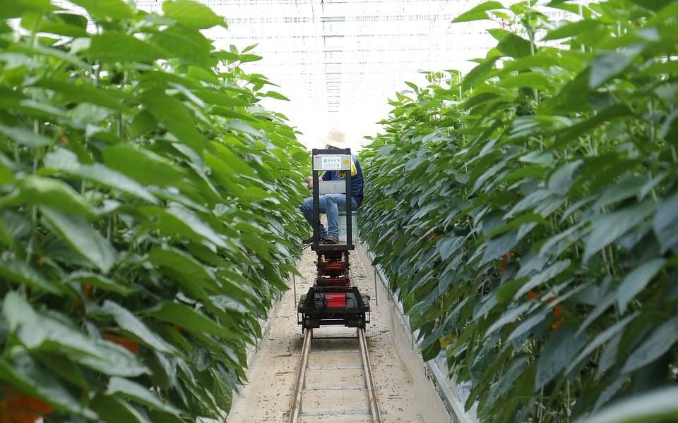 IoT in Agriculture: Five Technology Uses for Smart Farming and Challenges  to Consider - DZone IoT