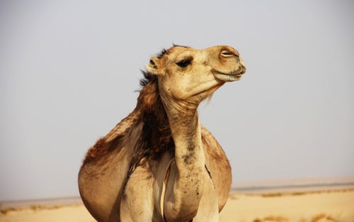 How to Migrate Your SOAP Web Service to REST With Camel