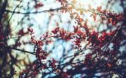 Spring Batch Goodies With MongoDB