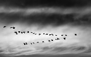 Data Migration Tools
