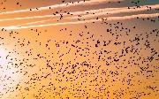 Database Migration Tools