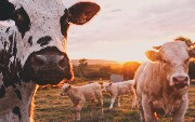 Cloud-Native Best Business Practices (Part 2): Why Cattle, Not Pets