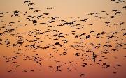Tips for Migrating HSQL to PostgreSQL