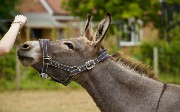 PGP Encryption in Mule 4: How it Works