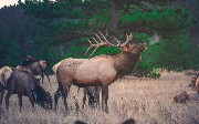 Hunting the ELK (Stack): Data Monitoring to Visualization