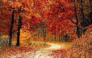 What Raking Leaves Exposes About Your Development Strategy