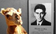 Getting Kafka Ready for a Camel Ride