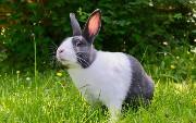 Application Modernization and Rabbits [Webinar]