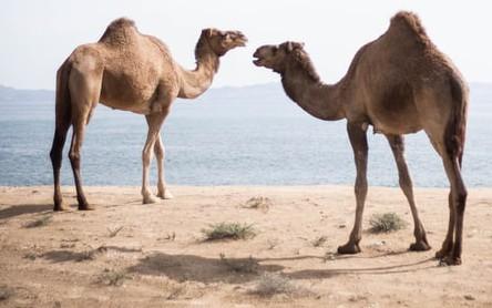Camel SQL Stored Procedure Example in Red Hat Fuse on Karaf