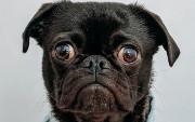 Three-Headed Dog Meets Cockroach: CockroachDB With MIT Kerberos