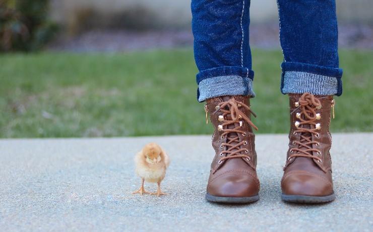 JSON API Using Katharsis and Spring Boot